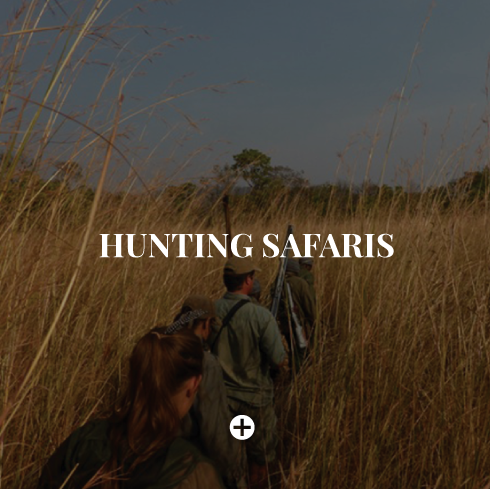hunting-safaris